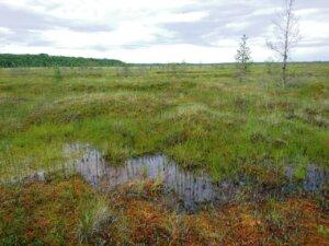 Фундамент на болоте